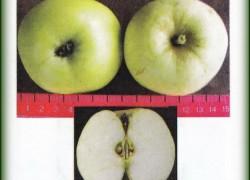 Описание сорта яблони Викинг