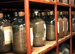 Методы отбора средних образцов посевных семян