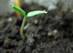 Порядок определения всхожести семян