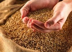 Расчет посевной годности семян