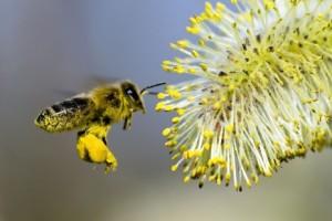 Зачем пчелам белковый корм