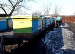 Основные работы пчеловода ранней весной. Весенний облет пчел