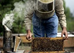 Главная весенняя ревизия пчелиных семей