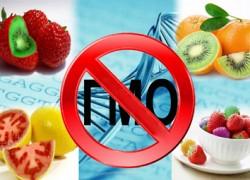 ГМО — благо или вред?
