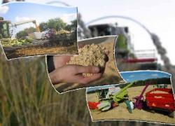 Фуражное зерно. Как повысить эффективности использования?