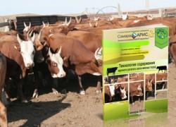 Технология содержания крупного рогатого скота мясных пород