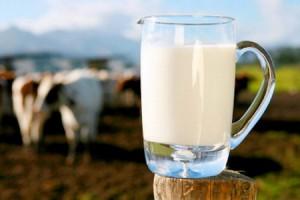 Создание условий для получения молока высокого качества