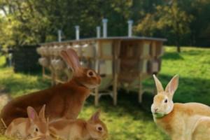 Разведение кроликов для получения шкурки и пуха. Кроличий мех