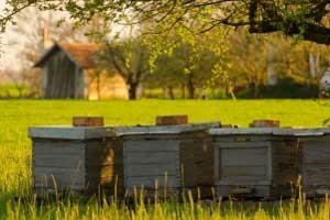Типы пчеловодческих хозяйств. Направления бизнеса в пчеловодстве