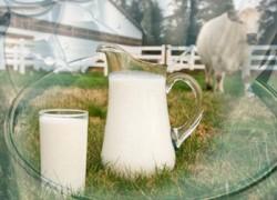 Почему быстро портится молоко?