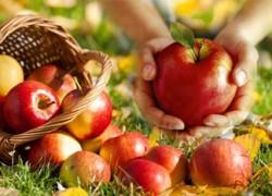 О пользе яблок. Отличие яблок со своего сада от магазинных