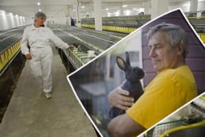 Кадровая проблема в кролиководстве. Ошибки кроликовода