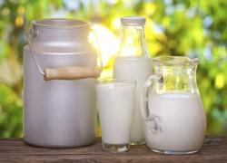 Польза молока. Плюсы и минусы магазинного молока