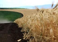 Экспертное мнение по теме развития сельского хозяйства