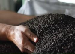 Роль органо-минеральных удобрений в стабилизации гумуса