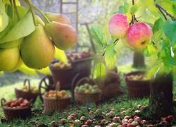Опытно-селекционные работы по изучению сортов яблони и груши