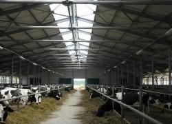 Акцент на увеличение поедаемости объемистых кормов в молочном скотоводстве