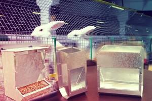 Требования к комбикормушкам для кроликов