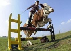 Что тормозит развитие отечественного животноводства