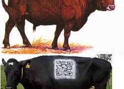 Животноводство: от истории до современности