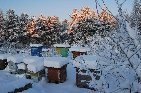 пасека зимой