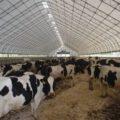 разведения коров