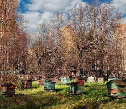 пасека осенью