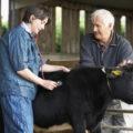 профелактика залог здоровья коров