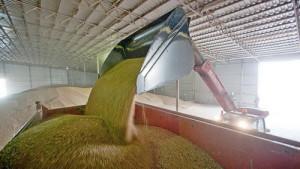 объемная масса зерна, погрузка