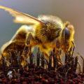 Основные этапы развития пчел