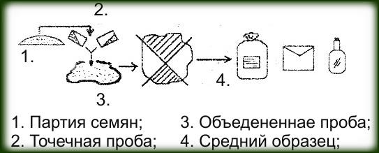схема отбора семян