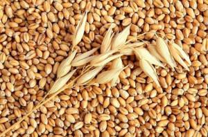определение влажности зерна
