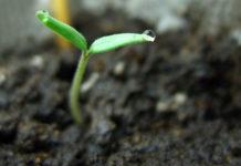 всхожесть семян