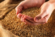 качество семян