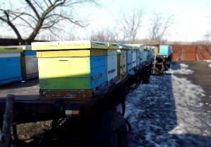 весенний облет пчел