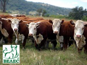 Развитие-животноводства-в-саарской-области