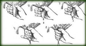техника ручного доения