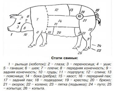 стати свиней