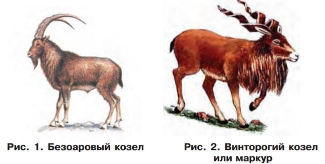 одомашнивание коз