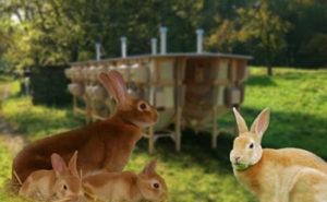 разведение кроликов на шкурки