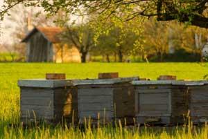 Типы пчеловодческих хозяйств