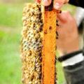 Что нужно знать пчеловоду при выборе и покупке пчел?