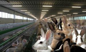 выбор-кролика-перед-покупкой