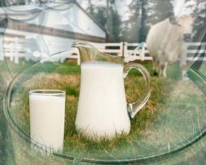 почему испортилось молоко