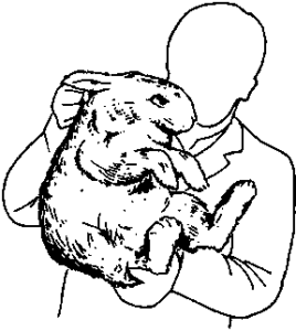 перенос кролика