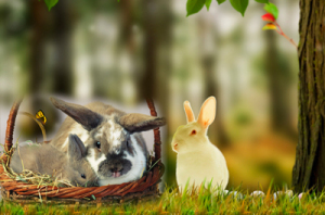 Как переносить и осматривать кроликов