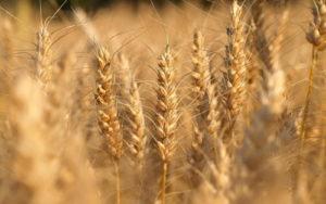 импортозамещение в сельском хозяйстве