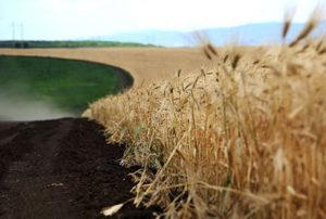 пути-развития-сельского-хозяйствав-РФ
