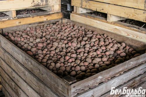 как-опредилится-с-картофелем