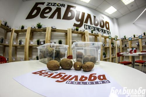 картофель-от-белбульба
